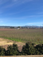 Napa Valley… a must visit spot in California, and it's even possible with kids!